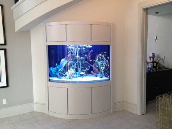 Best 25 Wall Aquarium Ideas On Pinterest Fish Tanks