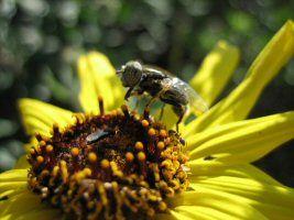 .:: Relações ecológicas, sociedade, colônia - Só Biologia ::.