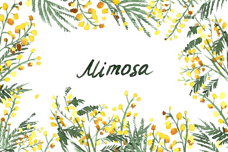 Mimosa flowers watercolor clipart, hand-drawn. Mimosa Yellow wedding flowers. Logo Blog. Flower watercolor Clipart, Hand-painted graphics. by RasvetaDigital on Etsy