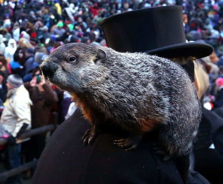 Groundhog Day 2015: Punxsutawney Phil sees shadow, predicts six more weeks of winter - The Washington Post