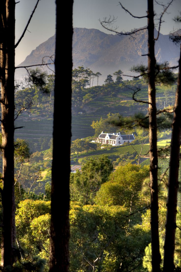Between the trees, you can see a Cape Dutch styled house in the Constantia winelands in Cape Town, South Africa.