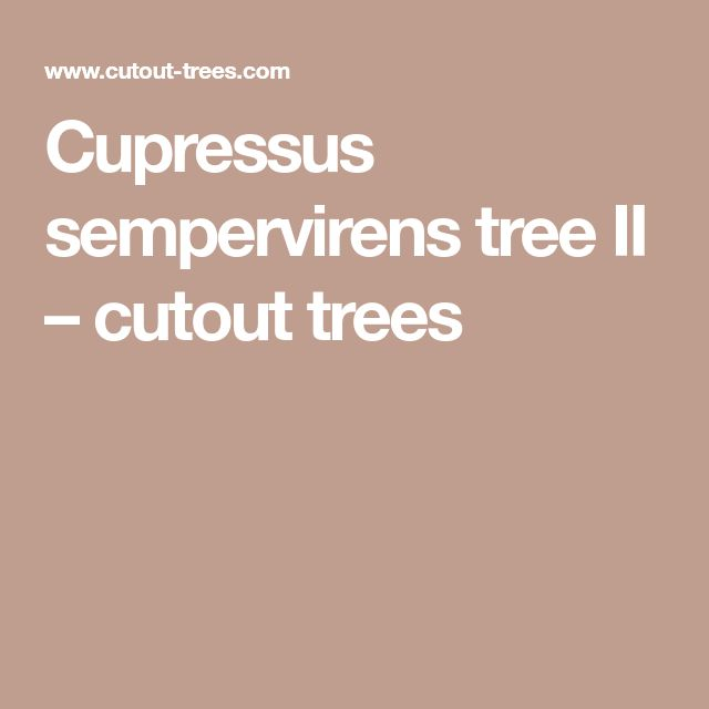 Cupressus sempervirens tree II – cutout trees
