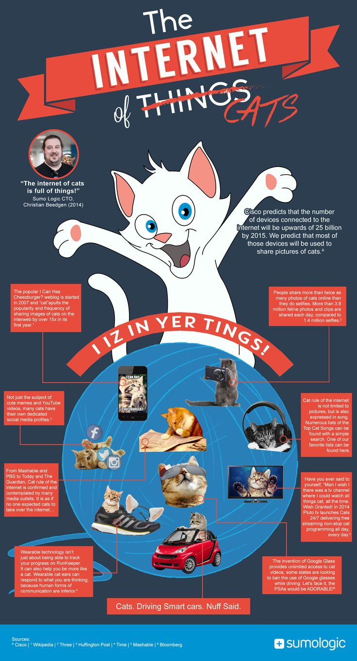 Cat-Infographic-Large #catinformation - More information about cats at Catsincare.com!