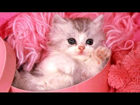 Cute Kittens A Funny And Cute Kitten Videos Compilation