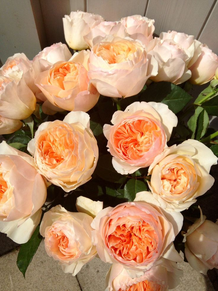 Peach roses  Found: http://www.theroseshed.co.uk/july-wedding-flower-guide-coral-peach-flowers