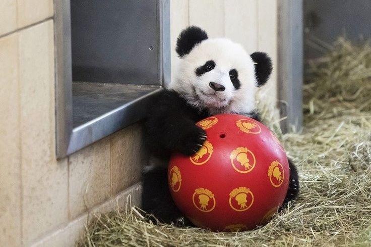 Benimle top oynarken misin?!