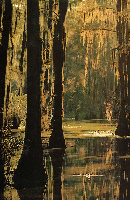Moss on trees.: Southern Charms, New Orleans Swamp, National Geographic, Places, Beautiful World, Cypress Trees, Natural, Louisiana Swamp, Spanish Moss
