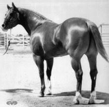 Skipper's King; 1954; Sorrel; (Skipper W x Santa Maria);   SHOW RECORD :  Halter…