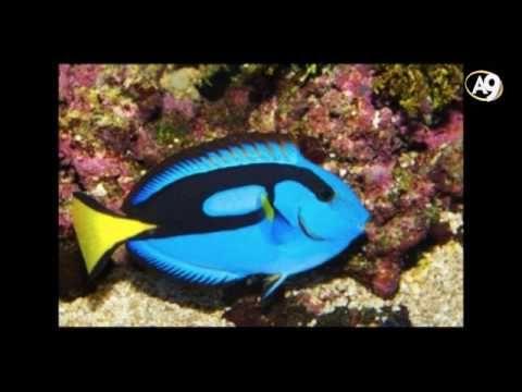 Canlıların renk ve simetrisi evrimi geçersiz kılıyor