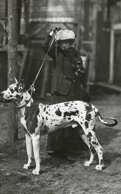 amsterdam hondententoonstelling 1913 (Dog Show, Amsterdam 1913)