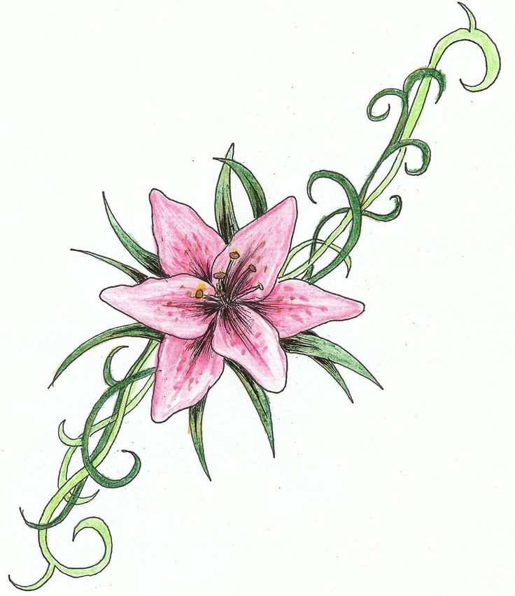 Best Ideas About Stargazer Lily Tattoos On Pinterest Lilies Flowers