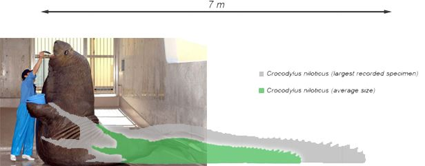Saltwater crocodile vs walrus size comparison | Comparative ...