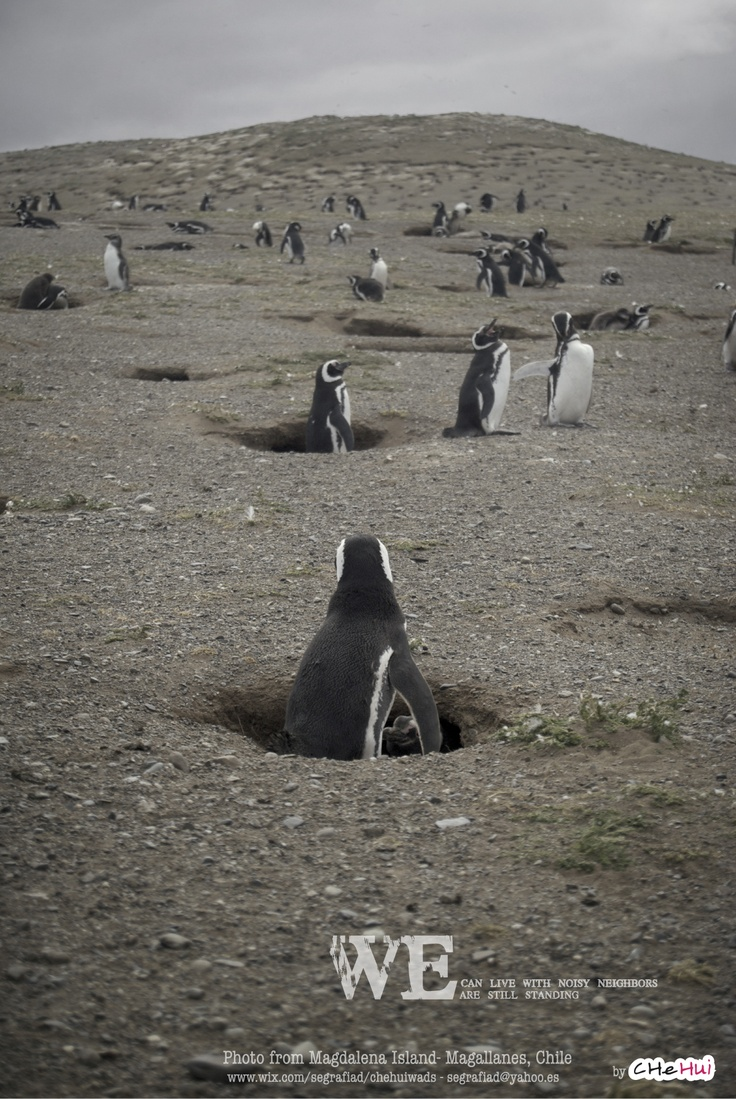Photography in Magdalena Island, South Chile