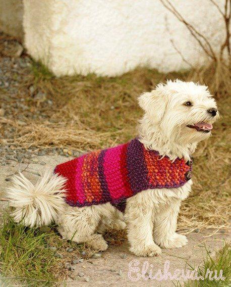 Накидка для собаки вязаная спицами и крючком   Блог elisheva.ru