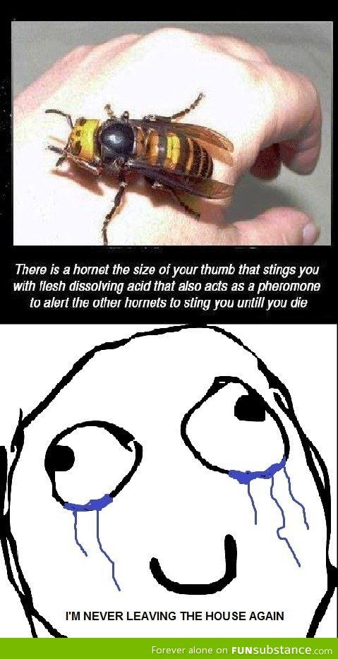 *shakes head* Asian bugs...