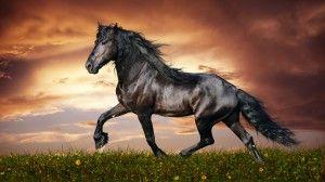Desktop Wallpaper: Black horse illustra...