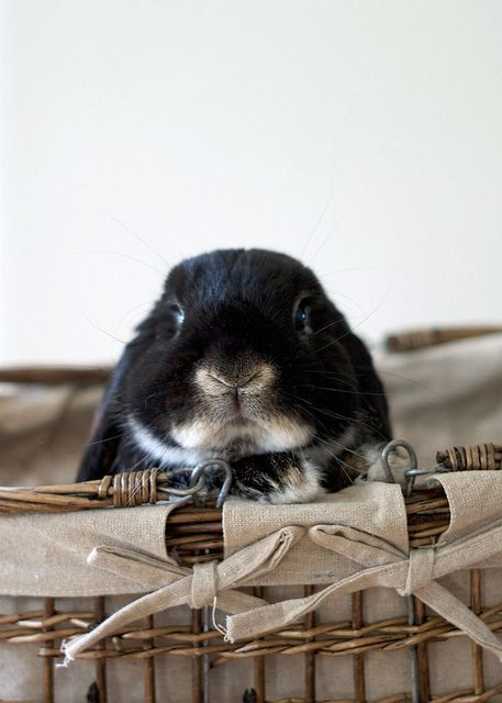 """my bun in a bascket"""