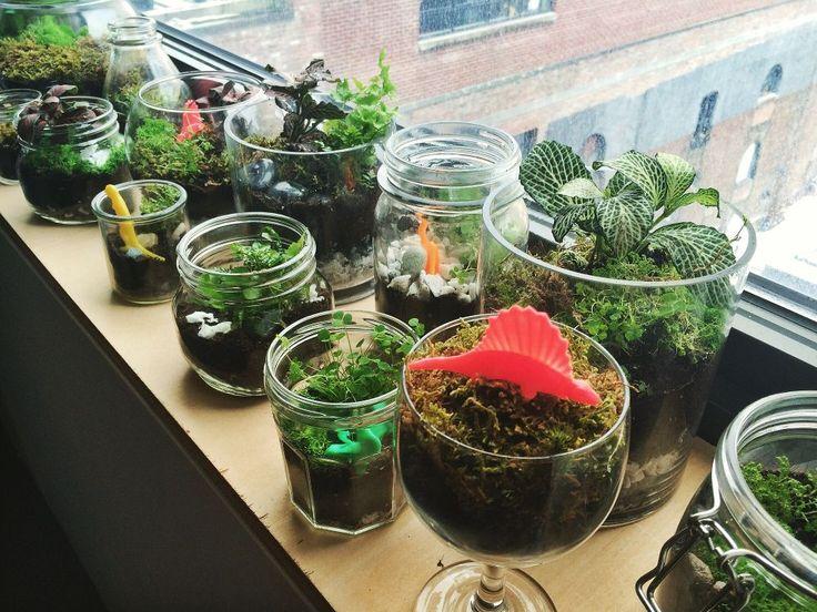 "employees each bring a plant  ""frog terrariums"" frog design | Glassdoor Photos"