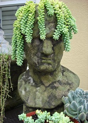 Head planters!! These would totally freak Steve out. Which makes me love them even more. :): Gardens Ideas, Donkeys Tail, Head Planters, Container Garden, New Haircuts, Burro Tail, Gardens Planters, Gardens Art, Gardens Humor