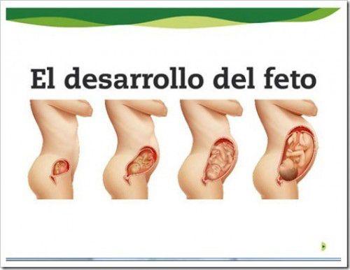 desarrollo-del-feto4-e1331070859368.jpg (500×386)
