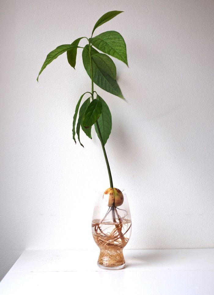 oltre 25 fantastiche idee su coltivare un albero di