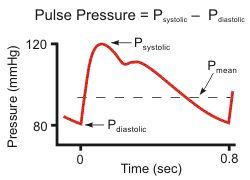 arterial and aortic pulse pressure