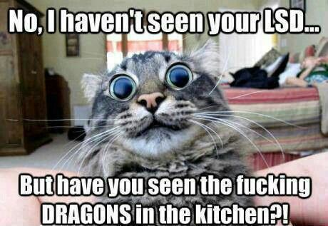 Cat on LSD dragons in the kitchen