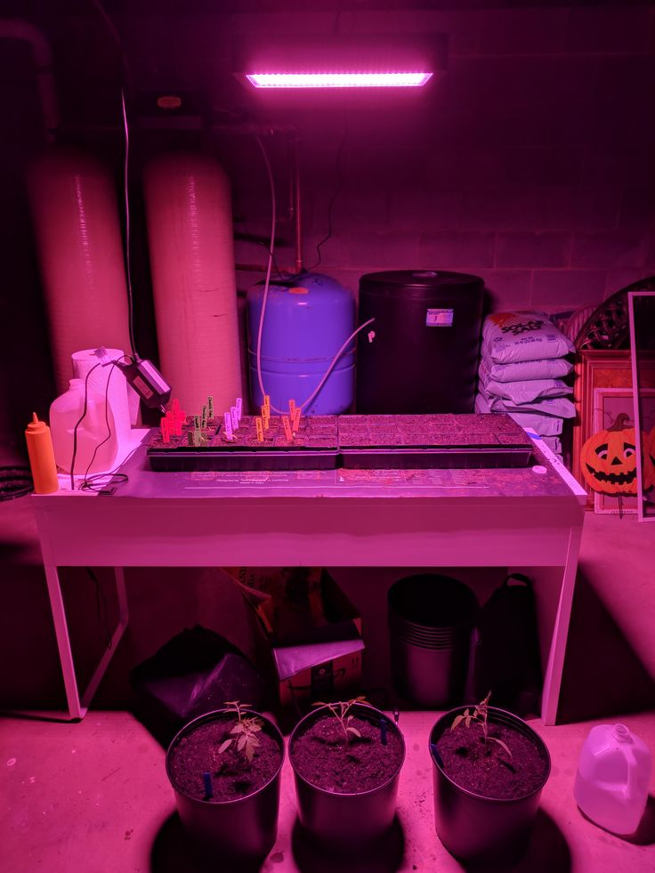 My messy indoor nursery. Hot peppers water melons honey dew cantaloupe and tomatoes. (So far) #gardening #garden #DIY #home #flowers #roses #nature #landscaping #horticulture