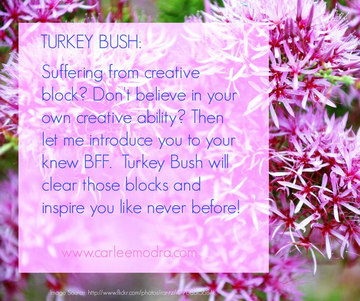 Turkey Bush Flower Essence - Used for busting through creative blocks! This stuff works!! #floweressences #australianbushflowers #emotions #creativity #healing