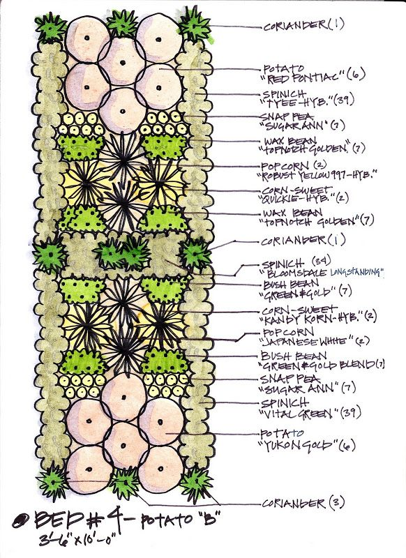 Companion gardening layout 4 garden pinterest for Vegetable planting layout