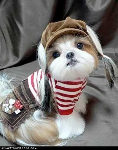 Awwww... Geez this pup is rockin' it