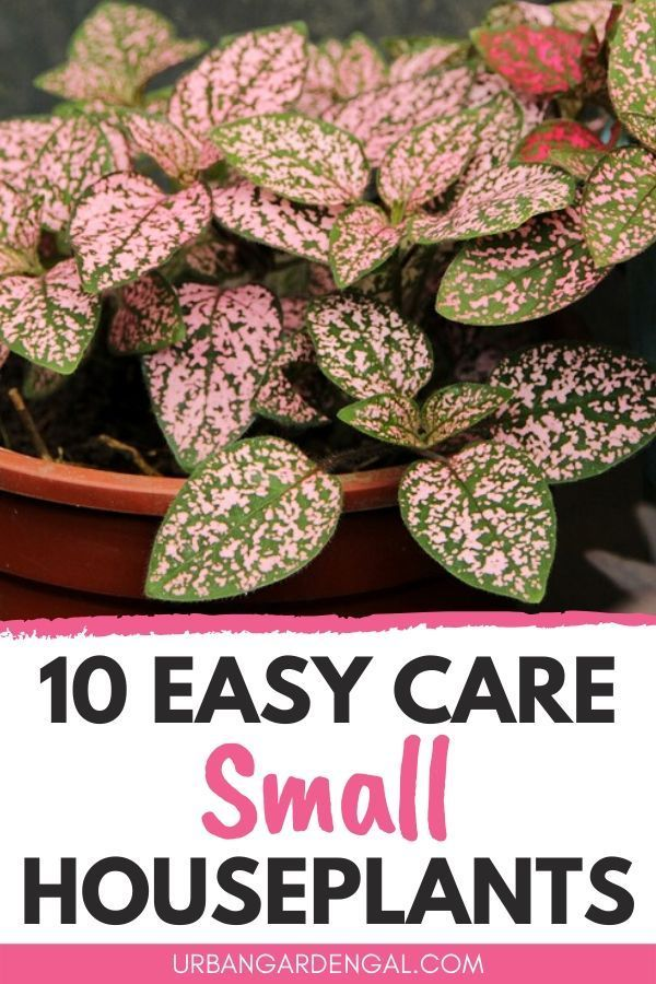 10 Easy Care Small Houseplants In 2020 Small Indoor Plants House Plant Care Hanging Plants Indoor
