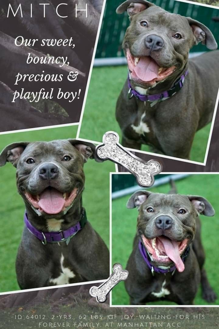 Pin By Tanya Faber On Safe Nyc Dogs Nyc Acc