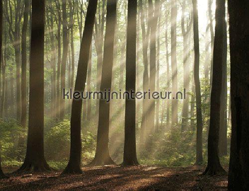 Fotobehang ~ Misty Forest | Evolutions 2 | kleurmijninterieur.nl  Voor in koekoek?