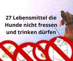 Was dürfen Hunde nicht fressen, ist eine schwierige Frage. Hier finden Sie eine Liste mit 27 Lebensmitteln die Hunde besser nicht fressen und trinken sollten. Manche Dinge sind giftig und harmlos wirkende Süßstoffe wie Xylit sogar tödlich.