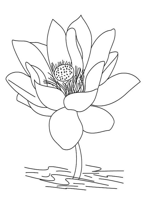 Blossom Lotus Flower Coloring Pages For Kids Flower Coloring Pages Flower Drawing Lotus Flower Drawing