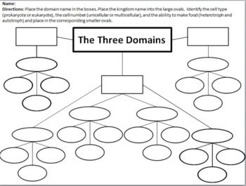 Domain And Kingdom Classification Concept Map And Graphic Organizer Concept Map Concept Map Template Graphic Organizers