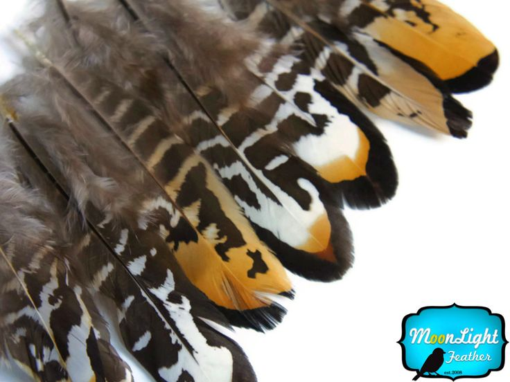 Pheasant Feathers For Sale | Moonlight Feather