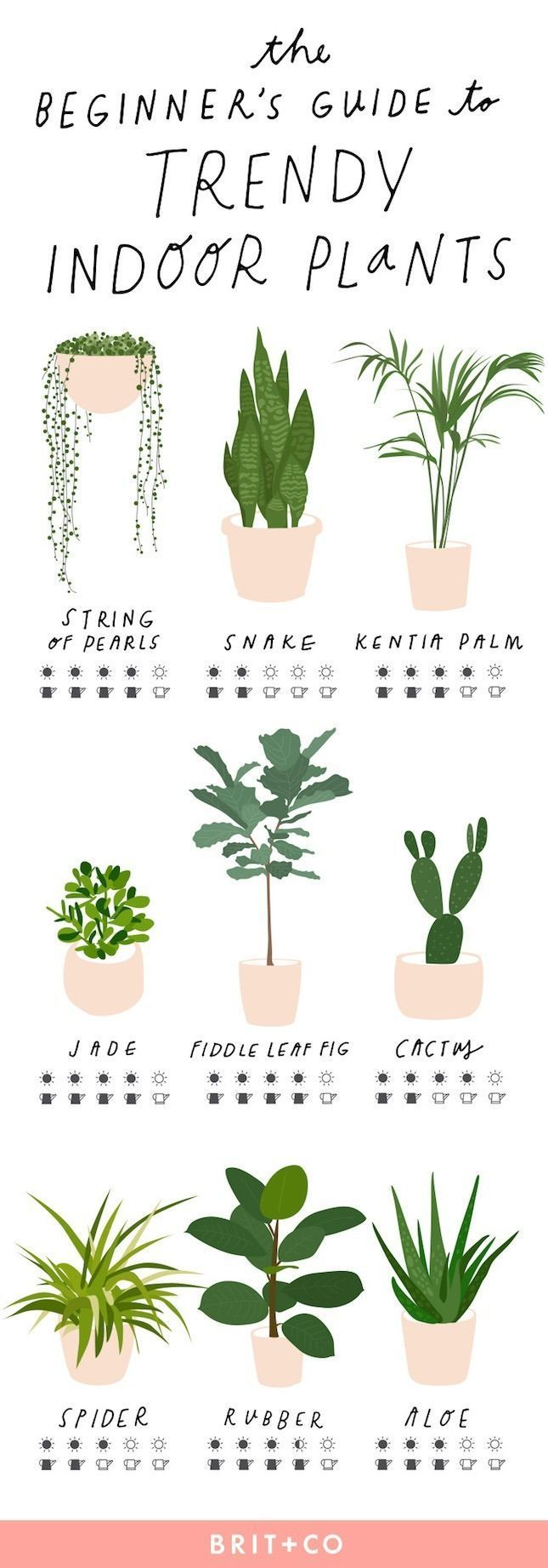 Keep your indoor plants strong + healthy with this simple beginner's guide to trendy indoor plants.