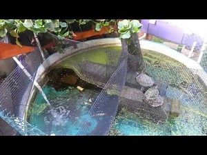 Best 25 turtle pond ideas on pinterest diy pond for Self sustaining pool