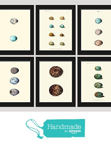 reviews around bird egg print set of 6 art print antique birds nests eggs shell flowers plate illustration room wall home interior decor to frame