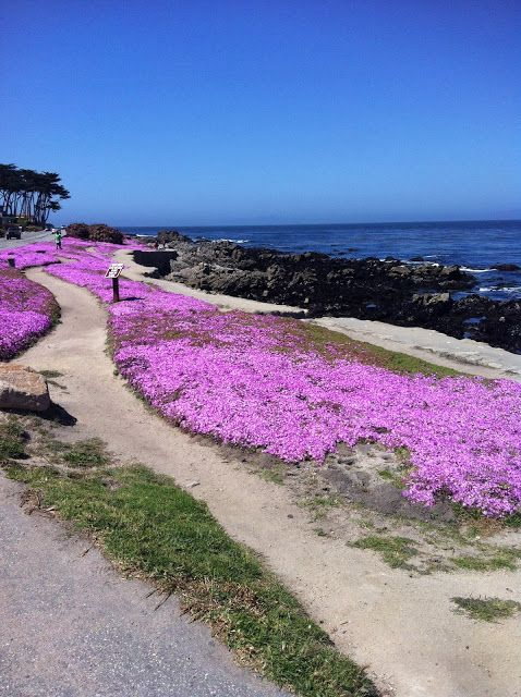 Northern California Style: Getaways - The Clement Monterey and Pebble Beach -We were about ten steps from the world famous Monterey Bay Aquarium.  Right on the Cannery Row, you are on the waterfront, as well as, a great path that you can walk or bike all the way to Pacific Grove.