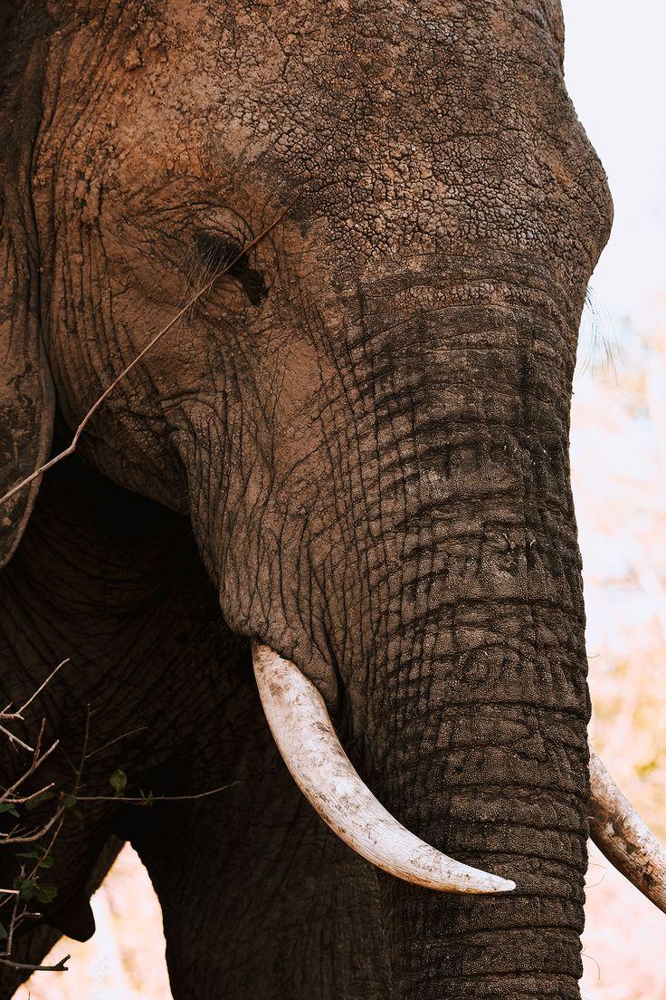L'Afrique du Sud, safari au Kruger Park   Hello it's Valentine