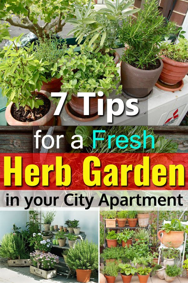 7 Tips For A Fresh Herb Garden In Your City Apartment Apartment