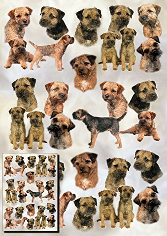 Border Terrier Dog Gift Wrapping Paper with Small Gift Card Design by Starprint