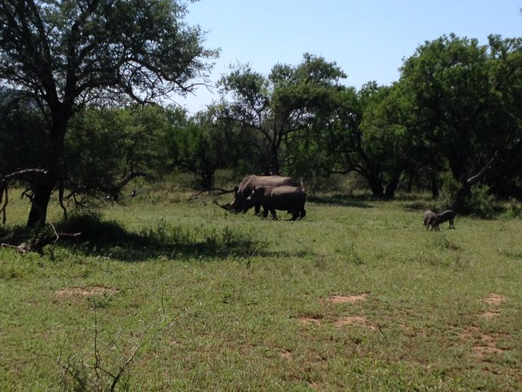 Hluhluwe Imfolozi Game Reserve in KwaZulu-Natal