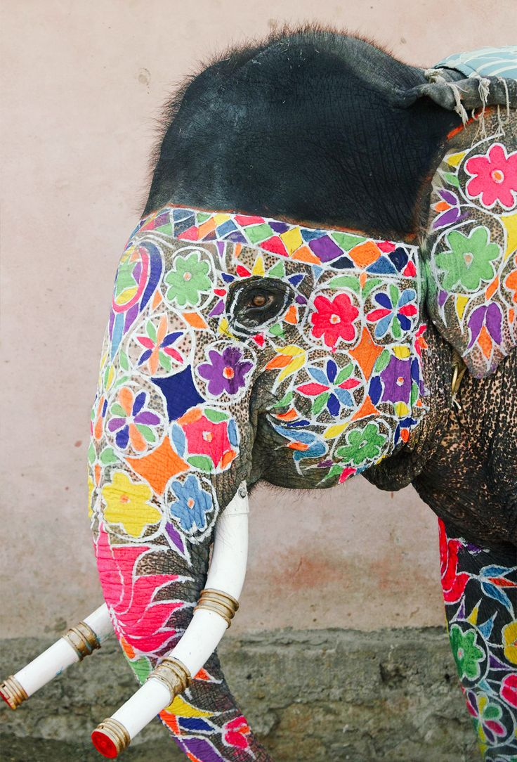 Beautiful  Can't believe they painted this on an elephant! How did the animal sit still for them to do that?