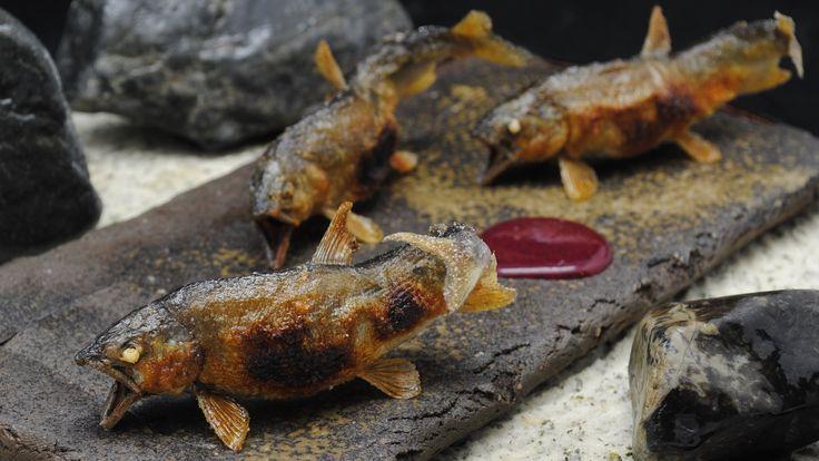 日本料理 龍吟 泳がし鮎の炭火焼2011