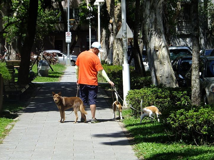 따뜻한 봄, 반려견 산책 시 유의하세요!