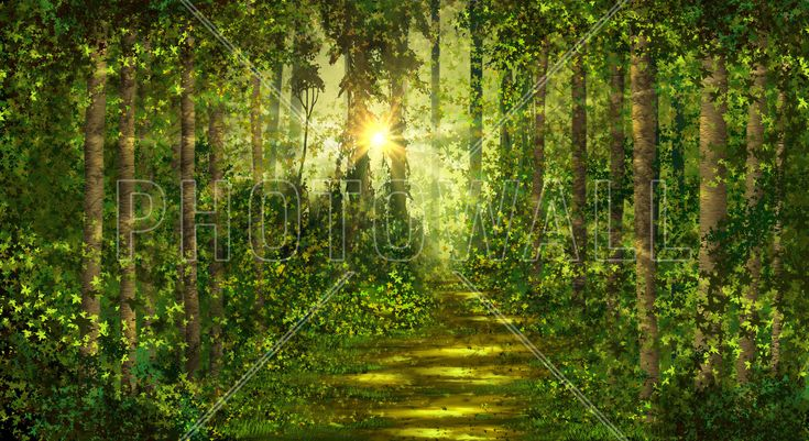 Forest Trails - Fototapeter & Tapeter - Photowall